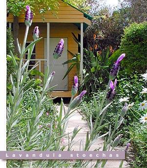 gardening_choosingpic.jpg