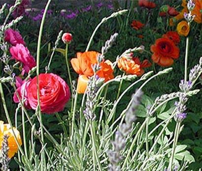 gardening_pic.jpg