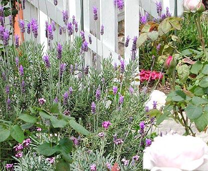lavender_calender_1.jpg